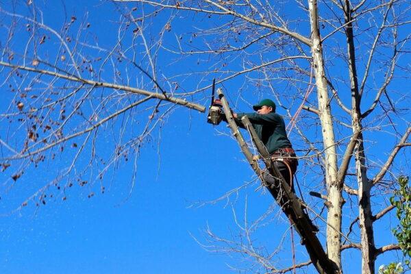 Potare gli alberi: come riuscire a sbarazzarsi dei rami